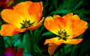 Orange Flowers Wallpaper - golden flowers 08 by awe inspired on deviantart