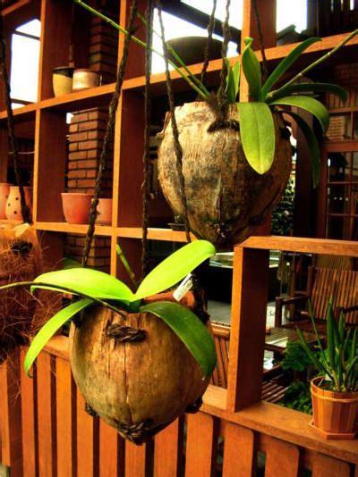 Pot Plastik Untuk Anggrek kreasi pot unik dari buah kelapa new iqmal tahir s