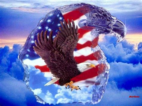 american images american bald eagle wallpapers wallpaper cave