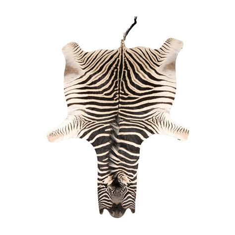 authentic animal skin rugs authentic zebra skin rug at 1stdibs