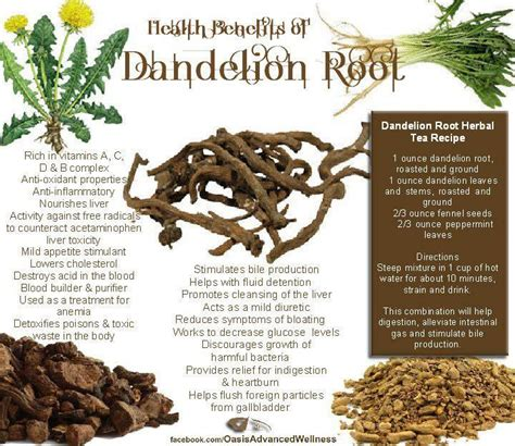 Resons To Detox Your With Dandelion by 17 Best Ideas About Dandelion Root Tea On One
