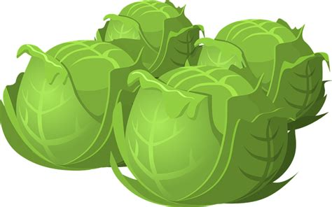 Cabbage Clipart free to use domain cabbage clip