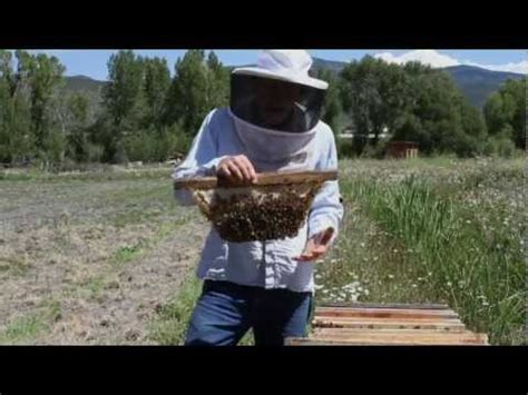 top bar beekeeping with les crowder and harrell