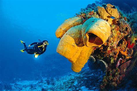 le de plongee plong 233 e s 233 jours et vacances plong 233 e sous marine avec l ucpa