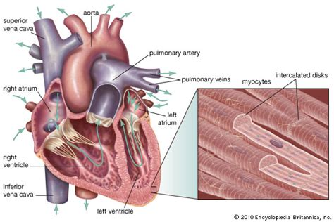 Essay On Pulmonary Circulation by The Human Effecting Picture Essay Of The Day