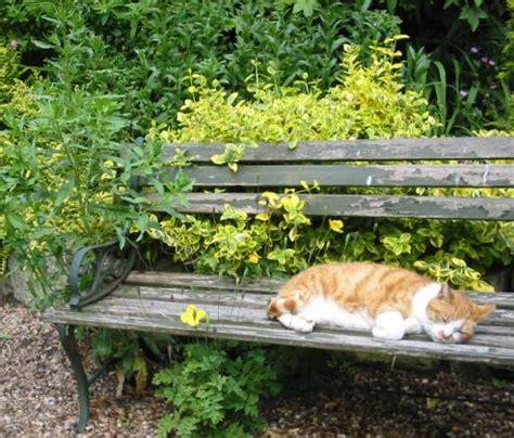 Schafhaltung Im Garten by 1000 Bilder Zu Tiere Im Garten Auf Garten K 228 Tzchen Und Schmetterlinge