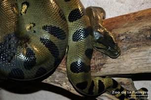 offer for black friday in amazon anaconda vert zoo de la palmyre