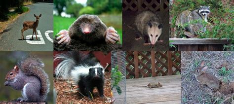 creative critter solutions