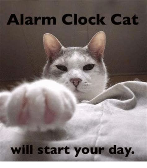 alarm clock cat will start your day cats meme on me me