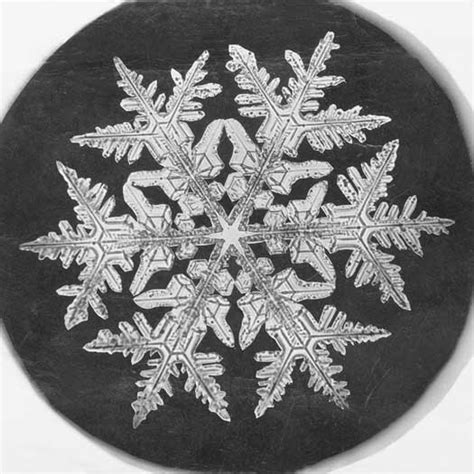 snowflake wilson bentley file wilson a bentley snowflake 1890 jpg wikimedia commons