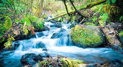 imagenes bonitas de paisajes de verano paisajes bonitos de primavera verde rio agua natural