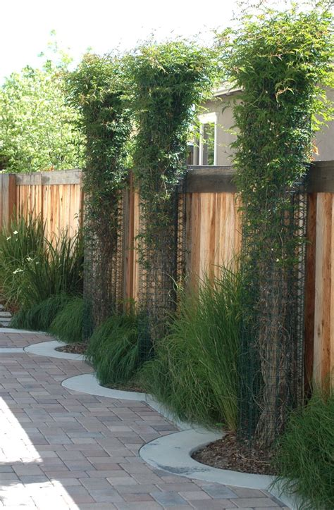 Fence Panels With Integrated Trellis Tubular Metal Columns Planted With Vines Are Integrated