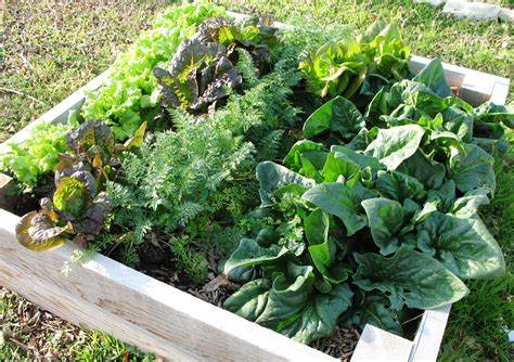Container Gardening 15 Best Vegetables That Grow Well In A Types Of Vegetable Gardening