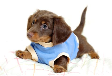 sweet puppies sweet dogy in sweater puppies photo 14748993 fanpop