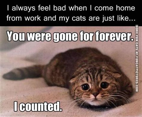 you where forever cat pictures