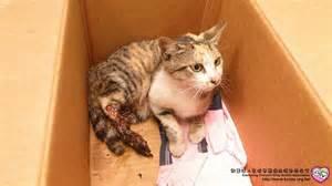 my is limping on back leg cat hurt back leg
