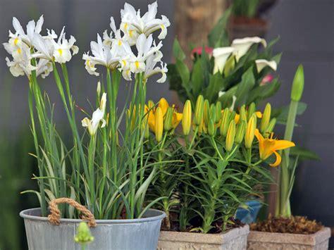 parte ricurva vaso esp 233 cie que florescem no inverno flores cultura mix
