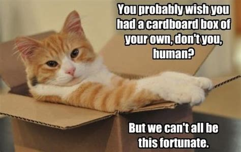 Cardboard Box Meme - plowing through life cats and boxes
