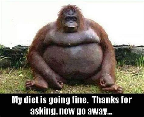 my silly my diet is going pictures quotes memes jokes