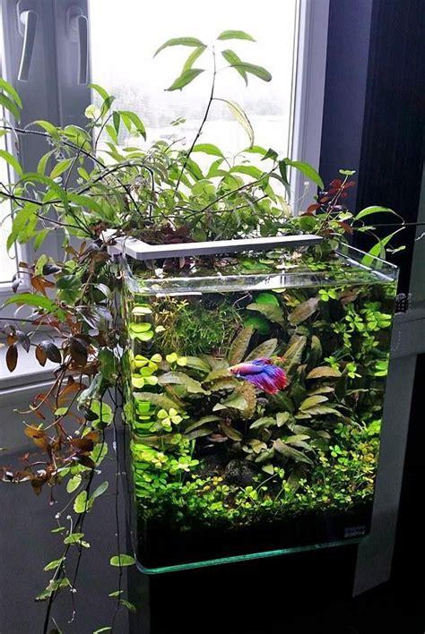 betta   bowl betta fish aquariums betta tank
