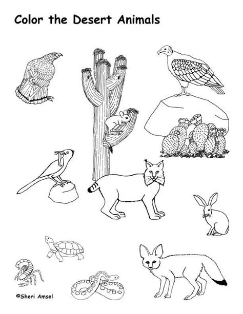 coloring pages of vires to print desert animals coloring page roxaboxen art ed southwest
