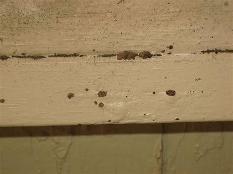 18 tiny holes in wood floor termites invade fairfax
