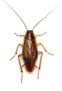 house pest household pest insects