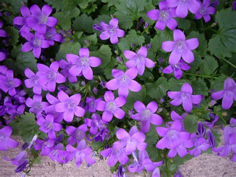 grower direct flower varieties canulas
