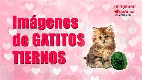 imagenes con frases bonitas de gatitos imagenes de gatos tiernos con mensajes de amor