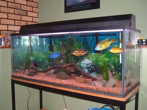 aquarium design ken cichlids com my 70 gallon tank
