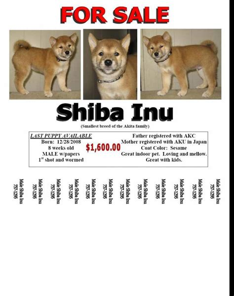pet shop business flyer template flyer templates creative market