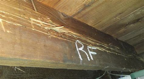 Pests We Treat   Termite damage in Cliffwood nearly