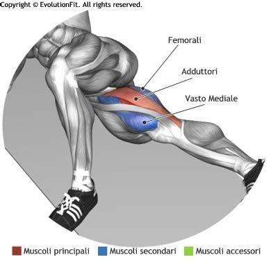 muscoli coscia interna evolutionfit gamba interna sdraiato
