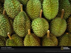 durian daze one man lord of the rings