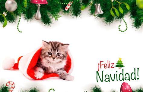 imagenes de feliz navidad con gatitos colecci 243 n de tarjetas de navidad de perros y gatos
