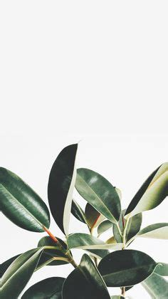pink wallpaper in emmerdale it s a faceswap matthew wolfenden and joe warren plant