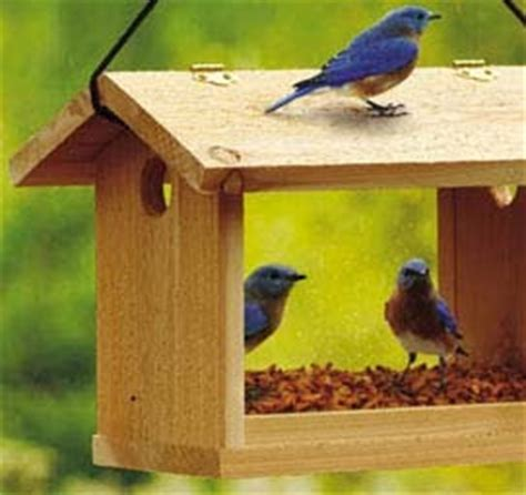 wild birds unlimited help my bluebirds left