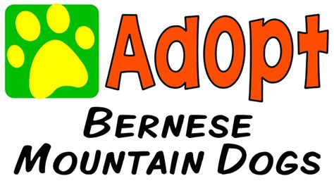 pomeranian breed rescue of northern illinois bernese mountain dogs animalrescuedirectory net