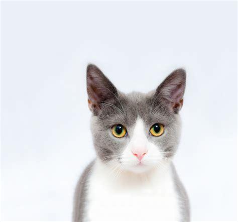 Free photo: Cat, Feline, Pet, Animal, Cute   Free Image on
