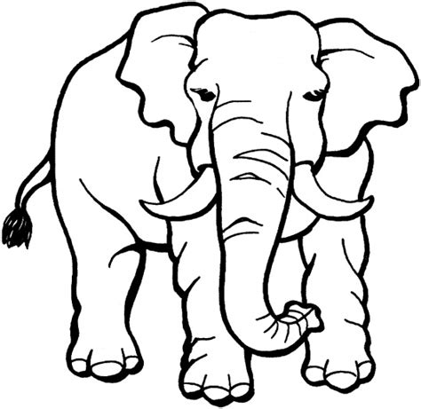 Elephant 2 Coloring Page Free Elephant Hiding Coloring