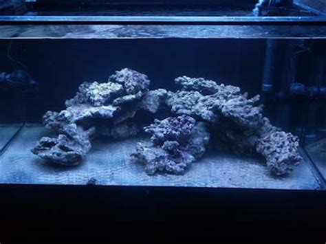 Aquascaping Live Rock Ideas Reefkeeping Magazine Tank Of The Month