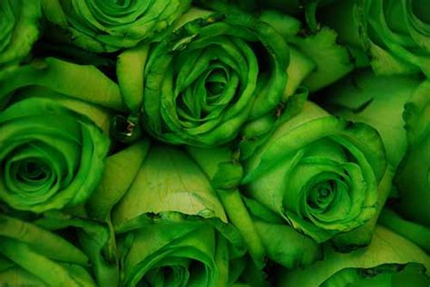 imagenes de flores verdes 10 flores verdes nomes fotos informa 231 245 es imagens