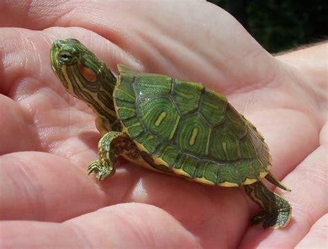 do turtles need heat ls baby turtles