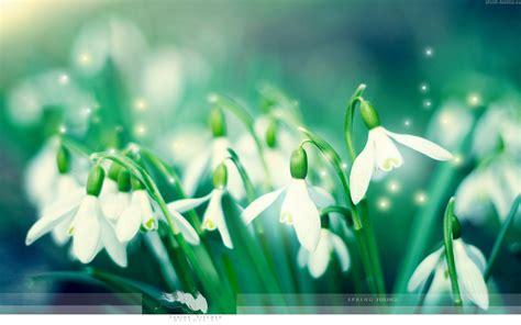 sfondi desktop fiori di primavera sfondi desktop fiori in primavera