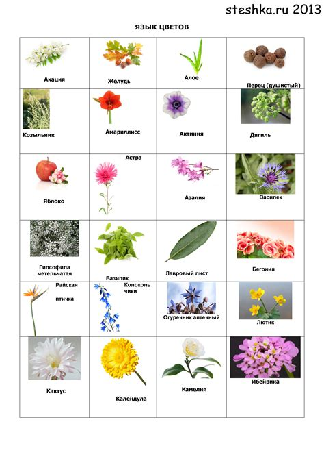 list of garden flowers common names list of garden flowers common names your guide to common