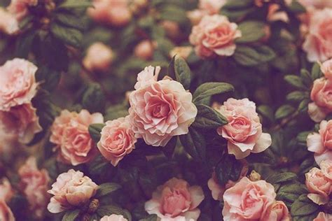 hd wallpaper on pinterest girl pinterest floral vintage flower backgrounds tumblr