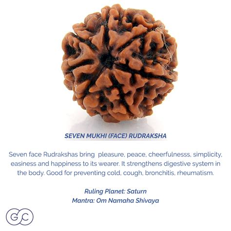 rudraksha meaning 7 mukhi rudraksha meaning and ruling planet gemme