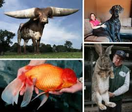 Biggest Animals: More of the World's Largest   WebEcoist