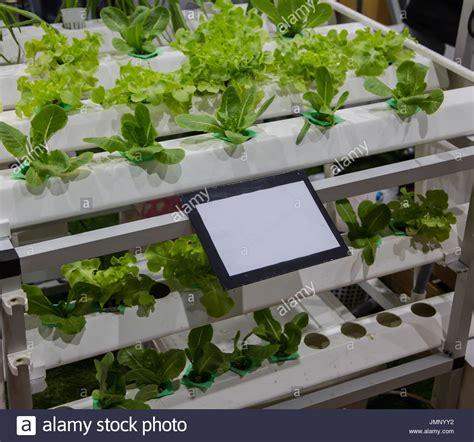 vertical hydroponic gardening systems fasci garden