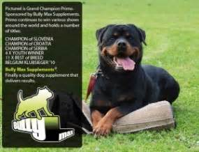 supplements for rottweilers rottweiler supplements that build